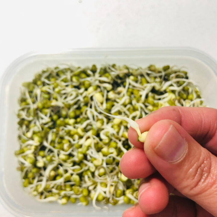 How to make green moong sprouts
